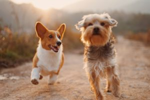 Using a Pet Trust